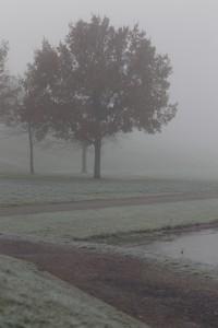 Nebel Politik Weg
