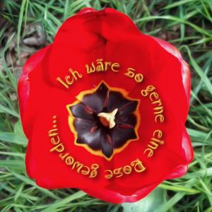 2014-04-19 14-38 ich waere so gerne eine Rose geworden